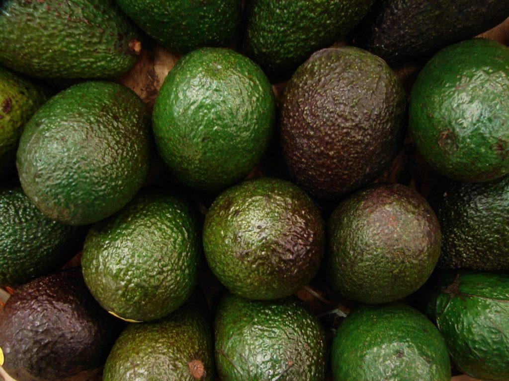 fruit avocado