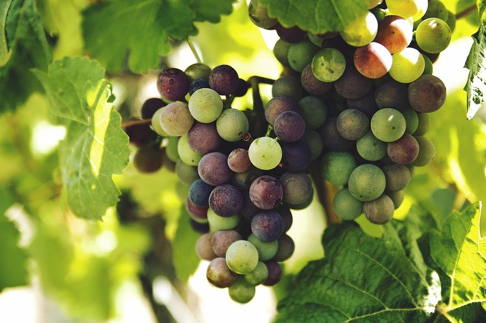 The Grape way to quit Alcohol